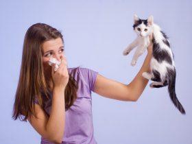 huisdierenallergie