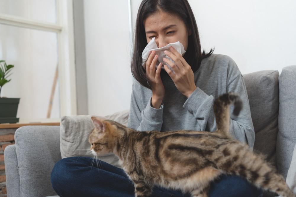 kattenallergie