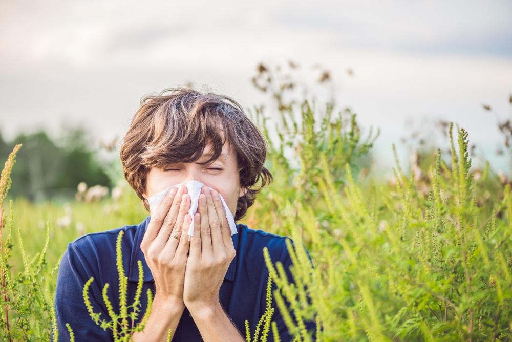allergie graspollen