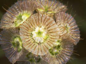 pollenradar